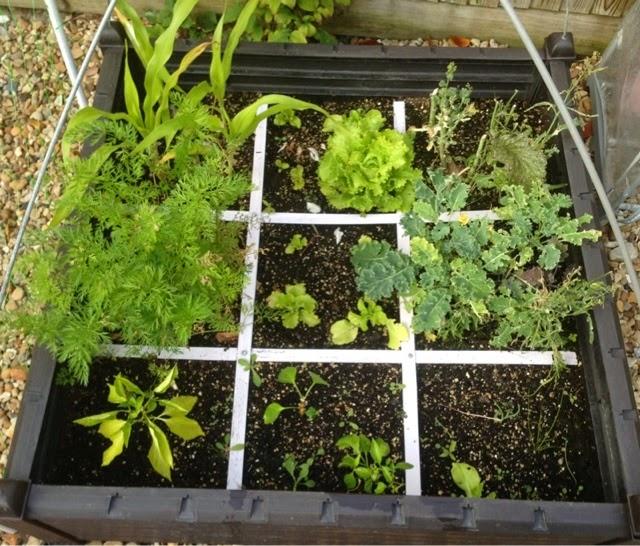 garden-update-roseyhome-july-2014